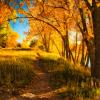 Listopad šumu razgolica – bojkotira ga crnogorica