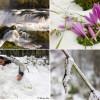 Snježna idila na Ličkoj Plješevici (FOTO)