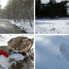 Zima na Braču: Pogledajte snježni ambijent na Vidovoj Gori