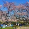 Sakura u Japanu