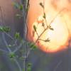 Svibanjske temperature na početku astronomskog proljeća