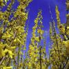 Proljetna ravnodnevnica: Počinje kalendarsko proljeće