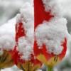 Kad svibanj iznenadi snijegom i ledom: Zimski udar prije 60 godina